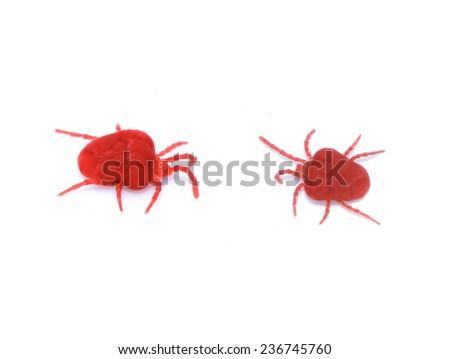 Red velvet mites on white background - stock photo