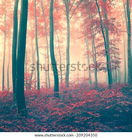 Red vintage fairytale season forest. Vintage filter effect used. - stock photo