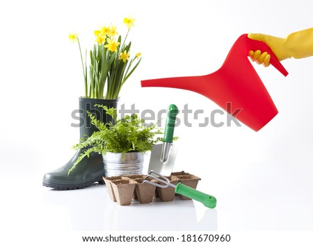 red watering can and house plant isolated - stock photo