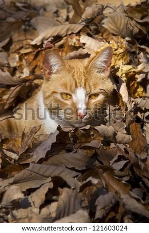 White Dog - Autumnal Phase
