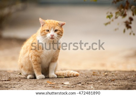 Red wild cat sitting on the ground