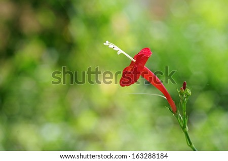 red wild flower in the rain forest - stock photo