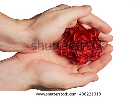 red wild rose in hands isolated on white background