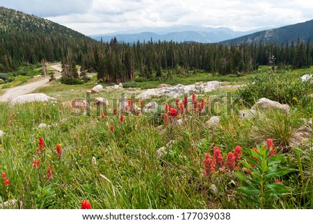 Red wildflowers blooming in the Colorado Rocky Mountain Wilderness - stock photo