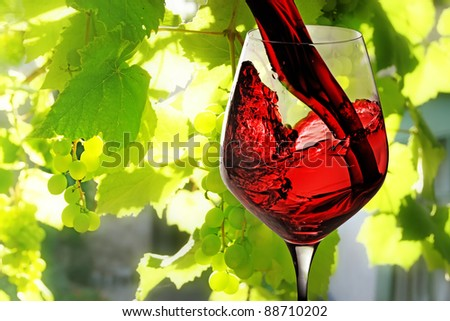 Red wine being poured into wineglass on background of green growing grape. - stock photo