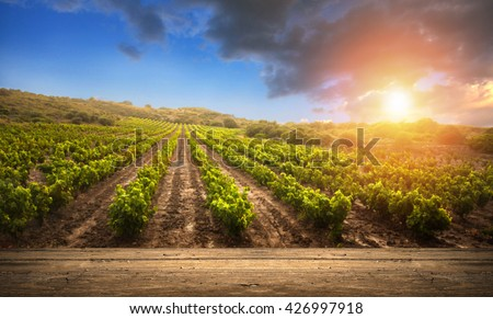 Red wine with barrel on vineyard in green Tuscany, Italy - stock photo