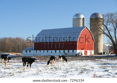 red Wisconsin dairy barn in winter with cows - stock photo