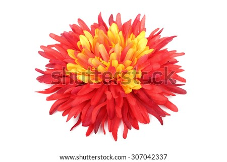 Red with yellow daisy head isolated on white background.