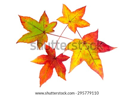Red yellow and green autumn leaves - stock photo