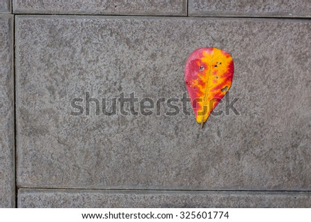 Red Yellow died leaf drop on the gray concrete floor, Last one or Lonely concept composition space for text. - stock photo