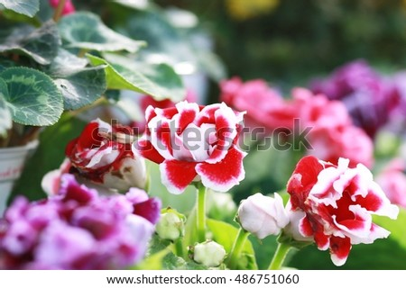 red, yellow, purple, orange, pink flowers, colorful of flowers
