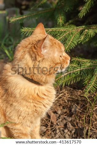 red young cat sitting near tree in forest. - stock photo