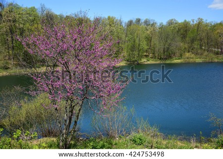redbud  and pond  in springtime in gettysburg, pennsylvania