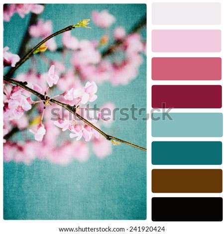 Redbuds Over Blue Color Palette - stock photo