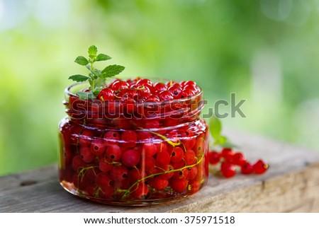 Redcurrants jam with fresh berries in the garden - stock photo