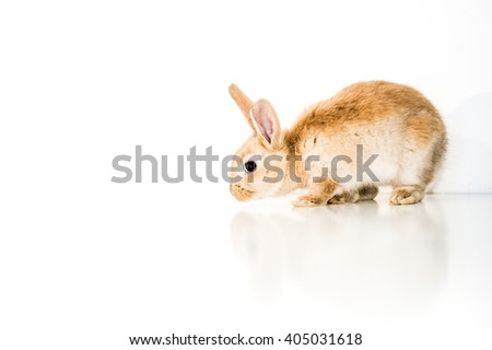 Reddish brown easter bunny on white background - stock photo