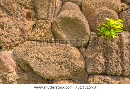 Reddish Brown Lava Wall with a Tree Shoot Growing Between the Rocks.