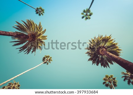 Redeo Los Angeles Vintge Palm Trees Vintage - clear summer skies - stock photo