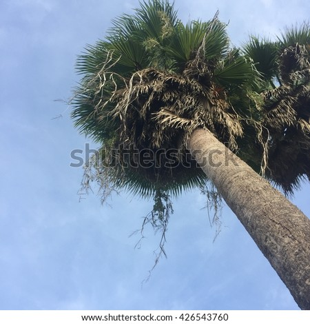 Redeo Los Angeles Vintge Palm Trees Vintage - clear summer skies great for any use. - stock photo