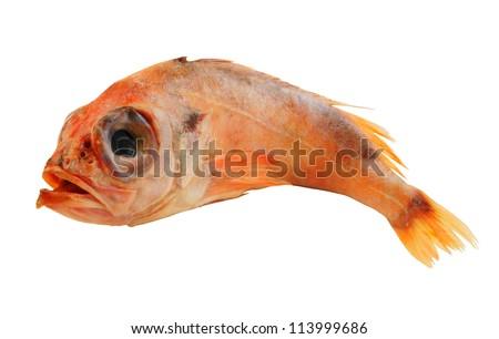 stock-photo-redfish-or-ocean-perch-isola
