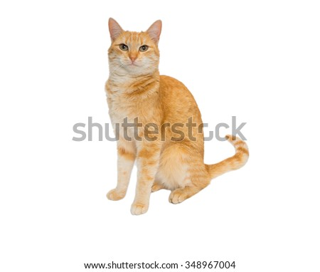 redhead cat isolated on white background - stock photo