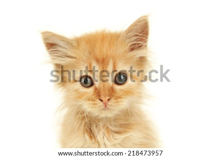 Redhead kitten on white background