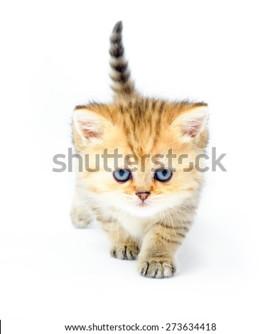 Redhead little kitten on white on white background - stock photo