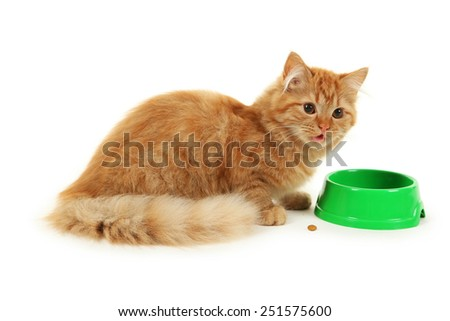 Redhead long hair kitten with bowl isolated on white - stock photo