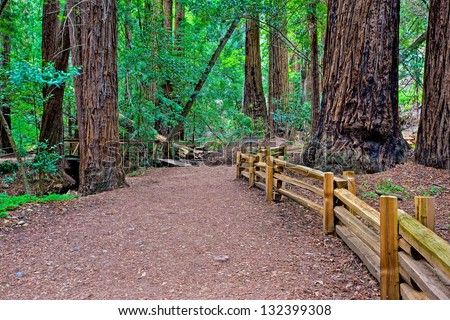 Redwood Grove, Big Sur, California - stock photo