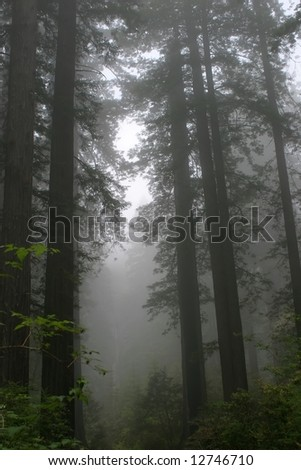 Redwood National Park in California - stock photo