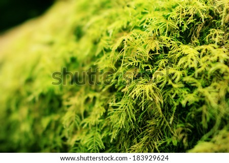 Redwood National Park 03 Moss covered tree in Fern Canyon California USA - stock photo