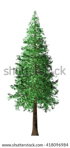 redwood tree isolated stock photos images amp pictures