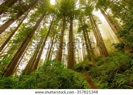 Redwoods State Park - stock photo