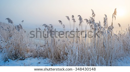 Reed along a foggy canal at sunrise in autumn - stock photo