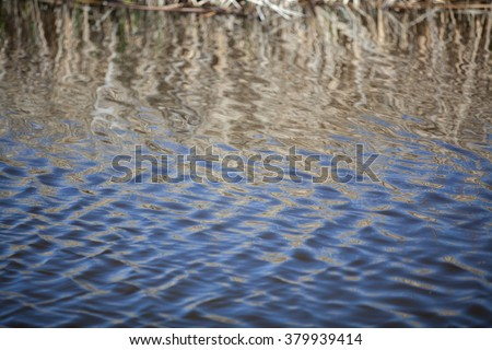 Reed and blue sky mirroring in a lake