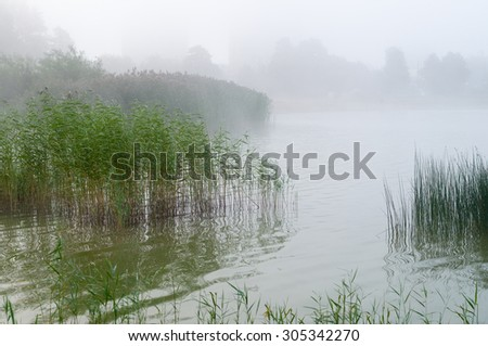 Reed and sedge thicket on the lake, misty morning background - stock photo