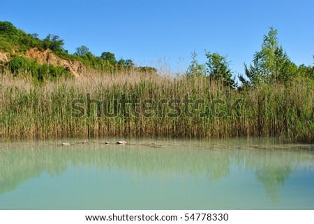 reed around the water