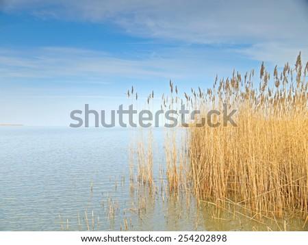 Reed belt at the lake Neusiedl, Burgenland. - stock photo