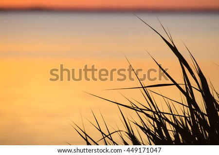 Reed leaves by sunset in front of soft colored water