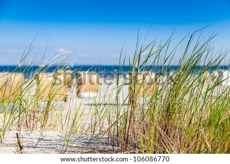 Reed on a dune with blurry background - stock photo