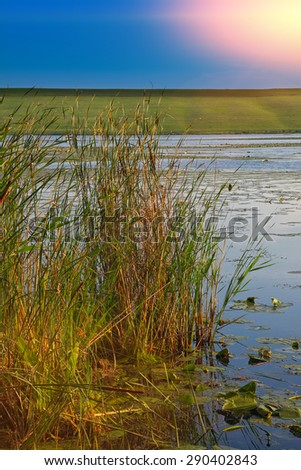 reed on lake in sunlight. Sunny day