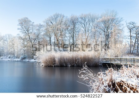 Reed on the lakeside of a frozen pond is covered with thin layer of freshly fallen snow, generating a serene white winter landscape on a sunny morning