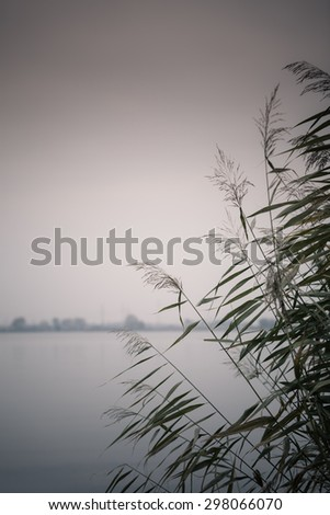 reeds against water at lake shore and industry landscape in the background - stock photo