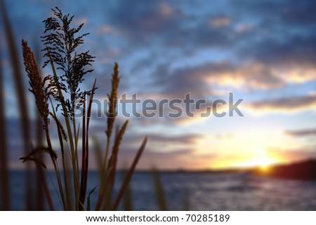 Reeds and Ocean Sunset - stock photo