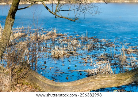 Reeds and reflection in still water for background - stock photo