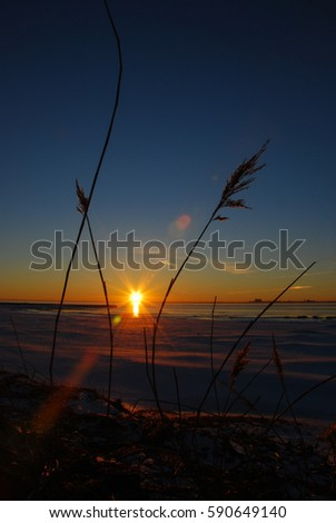 Reeds by the coast at a beautiful sunset