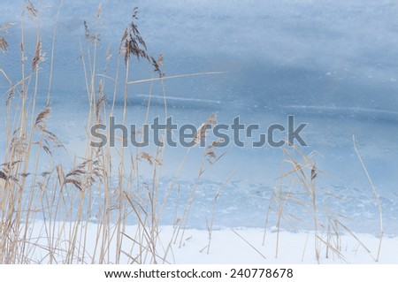 Reeds in cold sea. Winter background. - stock photo