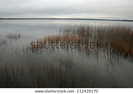 reeds in lake - stock photo