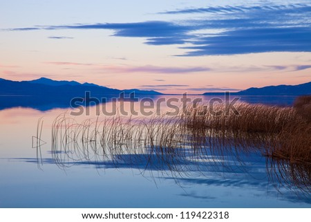 Reeds in Lake at Dusk - stock photo
