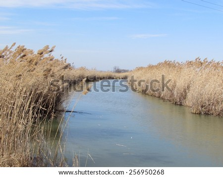 Reeds near rivers in spring in March - stock photo